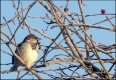 Bird in tree TZ70 P1030506.JPG