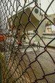 Fence (ed).jpg
