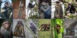 12 monkeys (1 of 1).JPG