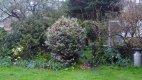 My garden.jpg