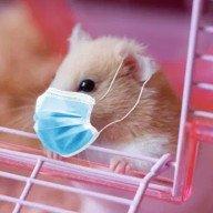 Server Hamster