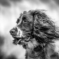 TCR4x4