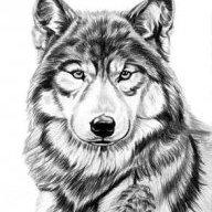 Wolf_36