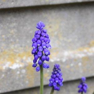 Our spring garden | Nikon D5300