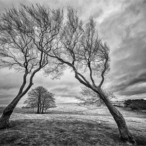 Two Sisters - Cleeve Hill
