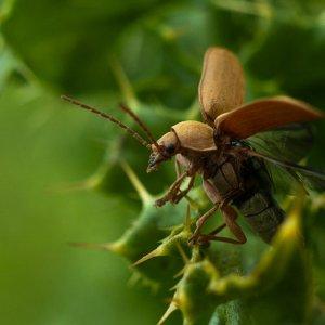 orchid-beetle-2-pixelsontherocks.jpg