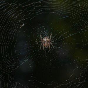 Simple spider