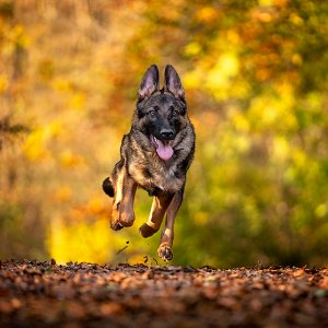 Running-Dog-copy.jpg