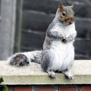 squirrel on wall.jpg